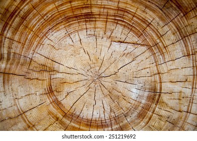 the structure of the cut tree. close up, top view
