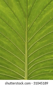 structure of leaf in backlight