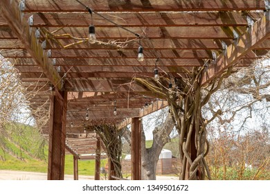 structure made of trusses trellice and lights in a tree full of branches