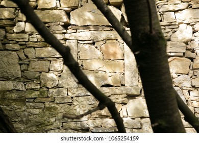 structured stones with tree