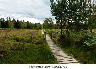 Struffelt heathland and moorland in the North Eifel Nature Park