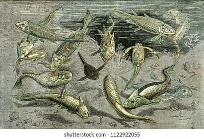 The struggle for existence in Devonian times, vintage engraved illustration. From Natural Creation and Living Beings.