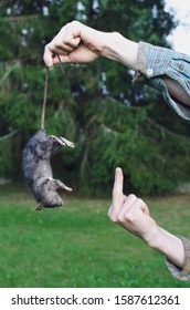 the struggle of the farmer with a rat is the worst pest in agriculture. the man shows an indecent gesture angered his rat, caught by the tail.