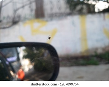 Struggling spider on the side of a cars wing mirror with graffited walls behind