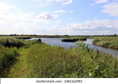 Strumpshaw Fen in Norfolk, England, british water birds and norfolk skyline