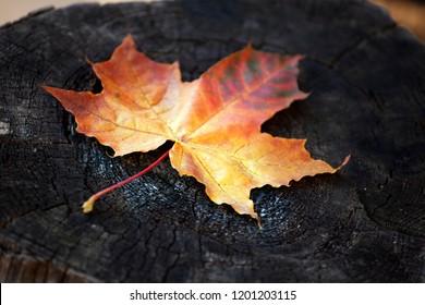 Stub autumn season leaf