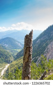 Stub tree with panorama of the Alps, Schladming, Austria, Europe