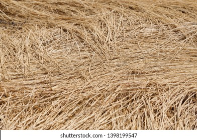 Stubble field, chaff surface texture