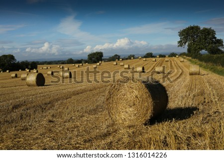 Stubble Field Hay Bales Summer Harvest Stock Photo Edit Now
