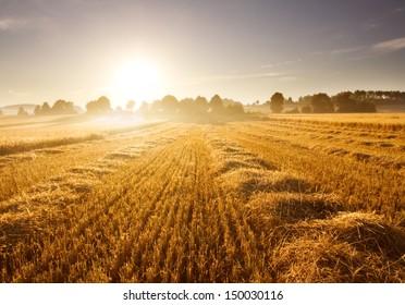 stubble field at sunrise