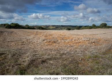 Stubble-Felder in der Gemeinde Olmeda de las Fuentes, Provinz Madrid, Spanien