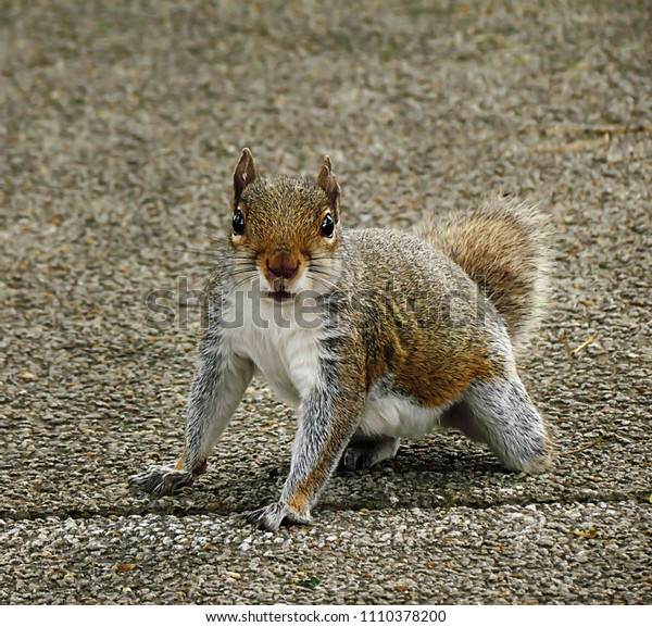 Stubby the Squirrel 2