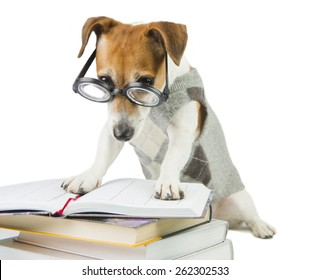 Student pupil dog and a lot of books. Study and teaching.  Strictly looking from under glasses. Working hard