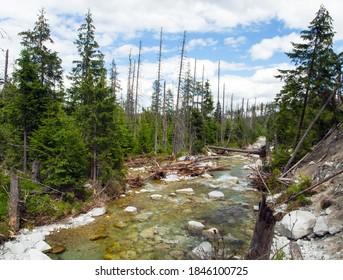 Studeny potok in High Tatras mountains, Slovakia - Shutterstock ID 1846100725