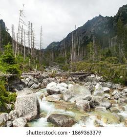 Studeny potok in High Tatras mountains, Slovakia - Shutterstock ID 1869363379