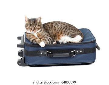 studio image of a cat lying on blue suitcase