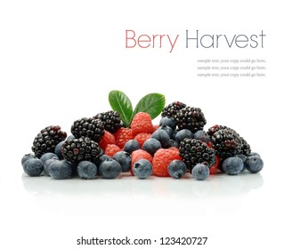 Studio image of a fresh harvest of seasonal berries against a white background with soft shadows. Copy space.