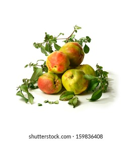 Studio image of ripening Quince fruit. A traditional Victorian fruit often poached in wine and used as filling in delicious autumn pies. Shot against a white background with soft shadows. Copy space.