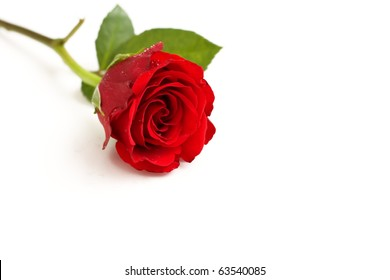 Studio isolated passion concept using a red rose.