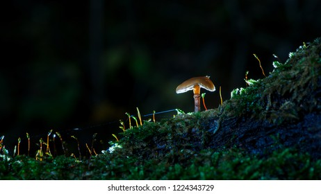 Studio lit mushroom with spider web and glowing mystical details