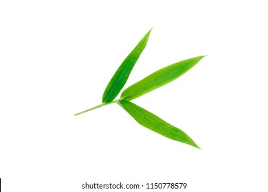 A studio photo of a bamboo leaf