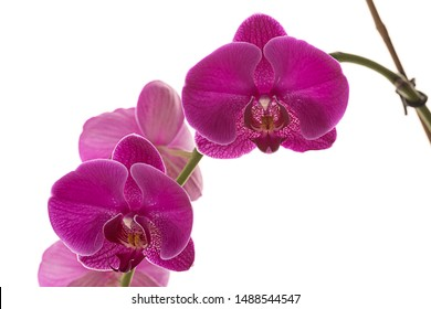 A studio photo of beautiful purple orchid flowers against a bright white background.