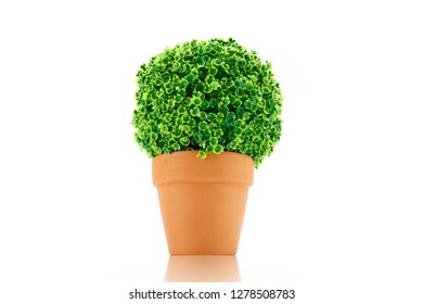 A studio photo of a potted hedge plant