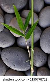 A studio photo of a river rock