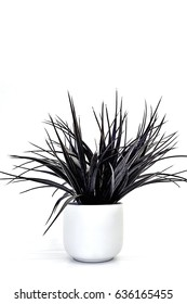 A studio photo of succulent decorative plants