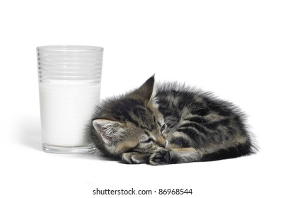 Studio photography of a resting kitten beside a glass of milk isolated on white