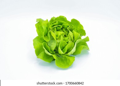 A studio photoshoot of Organic salad call butterhead Lettuce SALAD  on white background suitable for product use