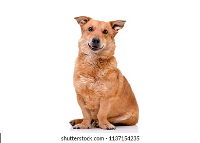 Studio shot of an adorable mixed breed dog sitting on white background.