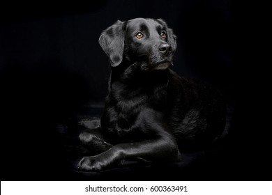 Studio shot of an adorable mixed breed dog sitting on black background.
