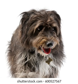 Studio shot of an adorable mixed breed dog standing on white background.