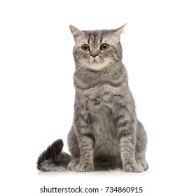Studio shot of an adorable tabby cat sitting on white background.
