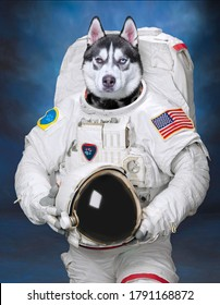 studio shot of a dog on an isolated background with edited images furnished by NASA