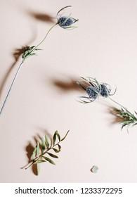 Studio shot of an Eryngium flower