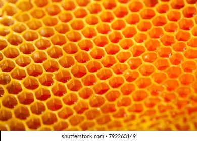 Studio shot of freshly picked organic honey in an authentic honey-comb - healthy food concept