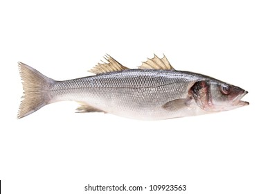 A studio shot of a sea bass fish isolated on white background