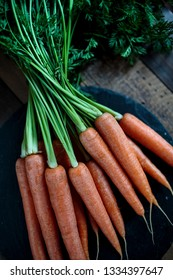 Studio Still Life with fresh Carrots with Greens