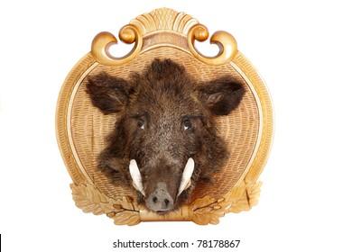 Stuffed animal of a head of a wild boar on a wooden board