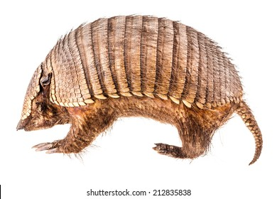 a stuffed armadillo isolated over a white background