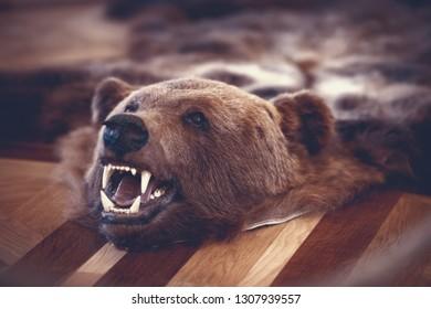 Stuffed bear in old castle room on floor. Hunter trophy.