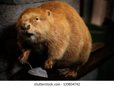 Stuffed beaver with construction spatula close-up