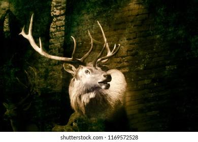 Stuffed deer head on brick wall, blackbackground. Retro litho effect.