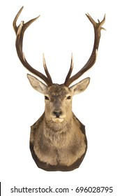 Stuffed deer head on white background