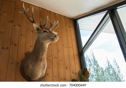 stuffed deer head on the wooden wall in a lighted room
