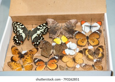 Stuffed insects Butterfly collection set for science exibition