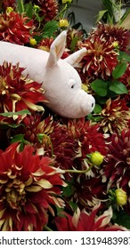 stuffed pig animal in red and white dahlia flowers