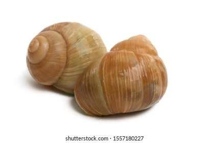 stuffed snails isolated on white background